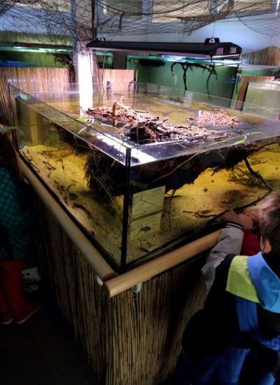 H2O Akváriumház vízi rovaros akváriuma2